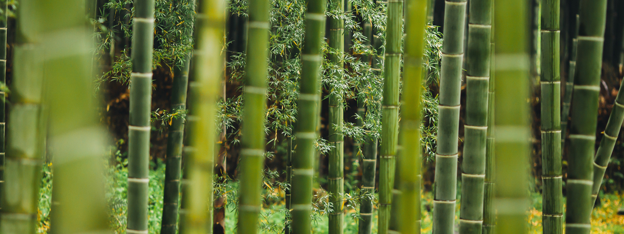 Bamboo fibers, one of the natural hydrocolloids we offer in our Food Solutions.